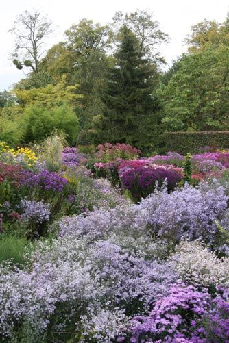 Gardens gardening and landscaping pinterest gardens for Purple grasses for landscaping