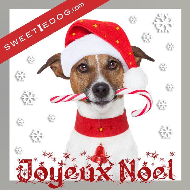 Sweetiedog vous souhaite un Joyeux Noël a vous et a votre chien www.sweetiedog.com