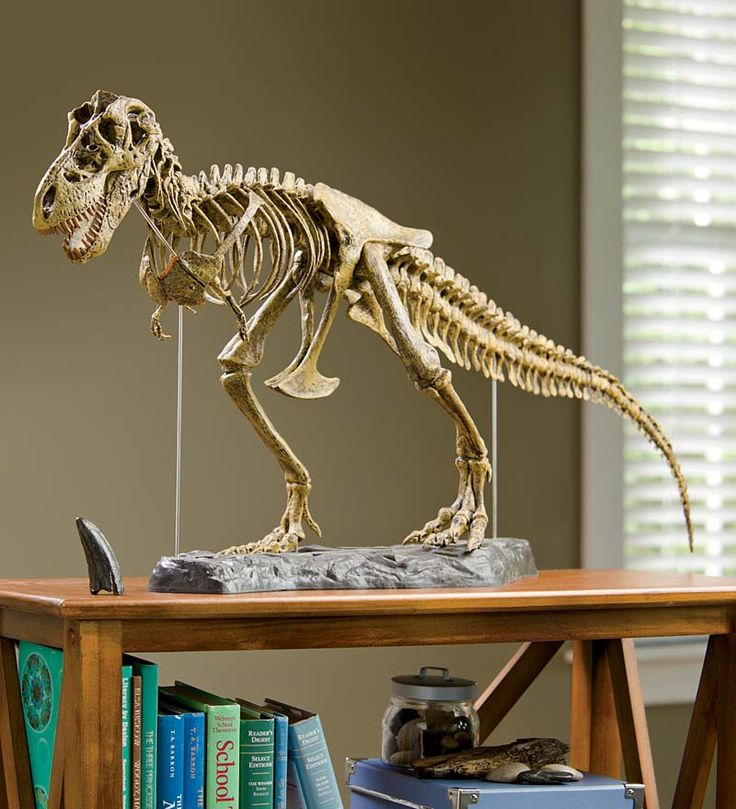 oooohhhhhh!  I want it :D  T-Rex Dinosaur Skeleton Model Kit $99
