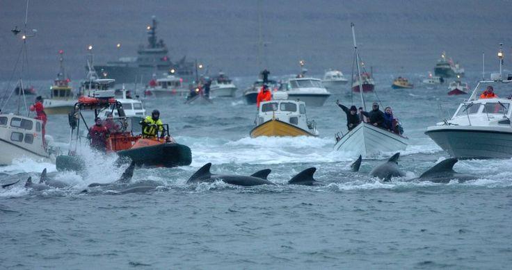 Diese Reederei setzt ein Zeichen gegen Walfang