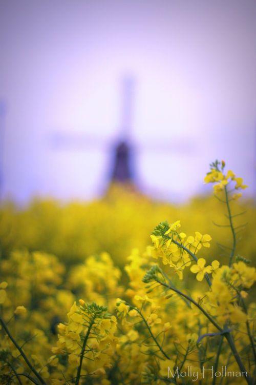 The Windmill at Sarre, Kent
