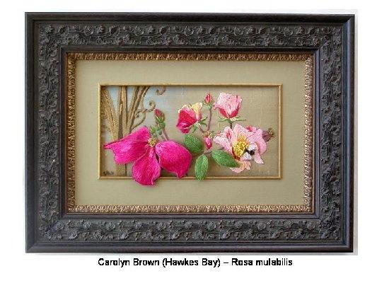 Rosa mulabilis - Carolyn Brown