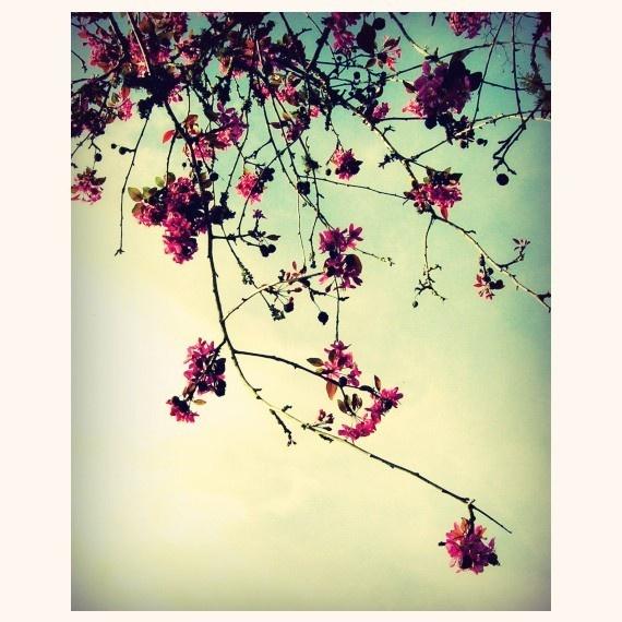 13 best Delicate Floral.. images on Pinterest | Blossoms, Flower ...