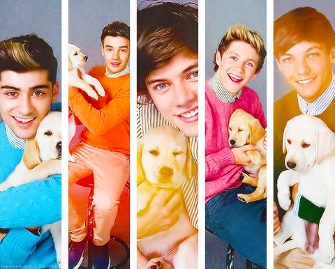 my heart meleted oh god 1d with puppies is my life !! <3