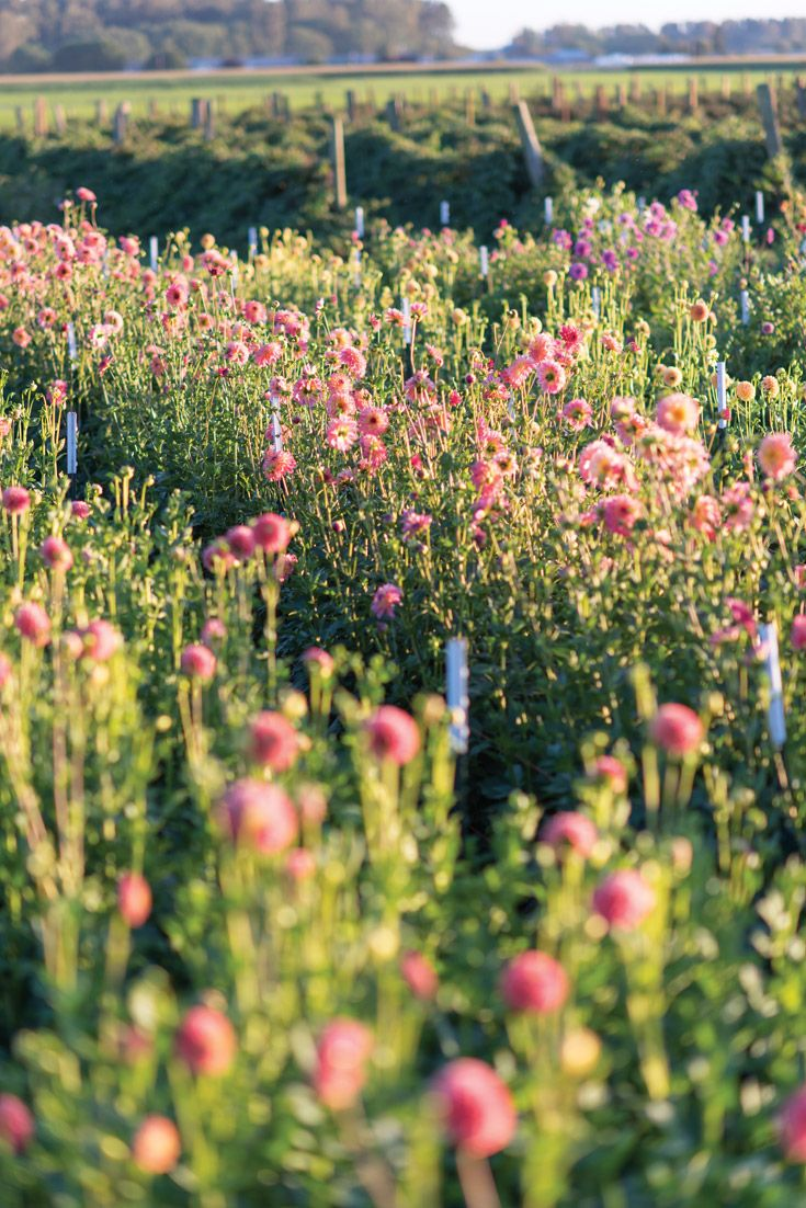 GLEANINGS FROM THE GARDEN: See how gardening enthusiast Erin Benzakein turned a modest 2-acre plot into Floret, an idyllic farm and thriving floral-design studio in Washington State. (photo: Georgianna Lane) #floret #flowerfarm #ErinBenzakein