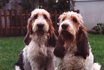 Svět pejsků - psí plemena, psí rasy, rasy psů, kokršpaněl, labrador <b>…</b>