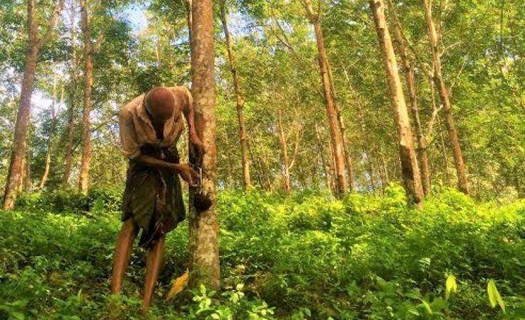 Sri Lanka natural rubber industry