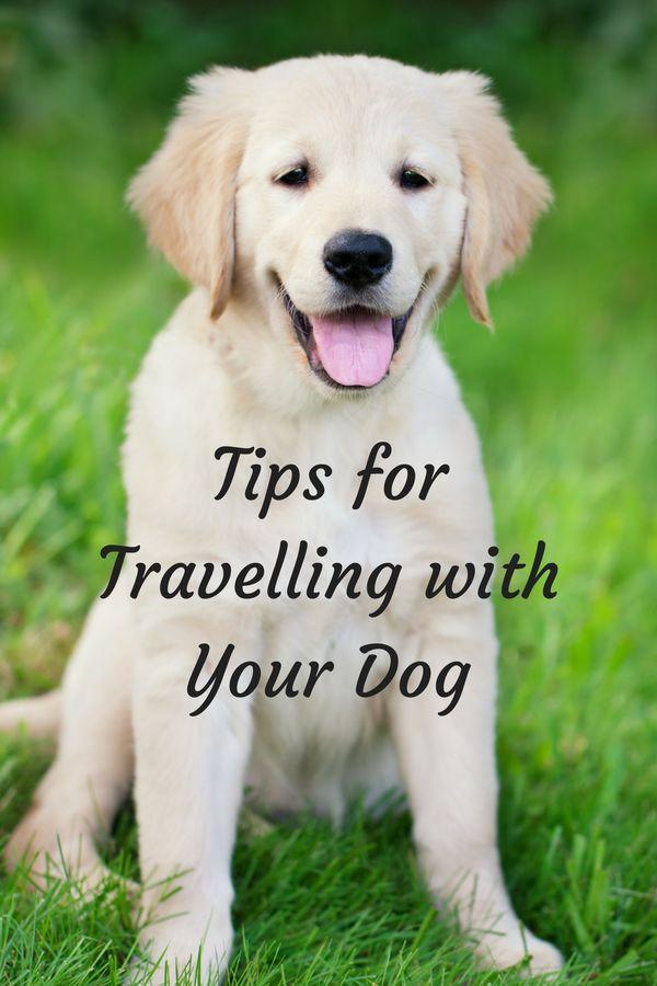 Travelling With Your Dog Around Western Australia Dog Travel