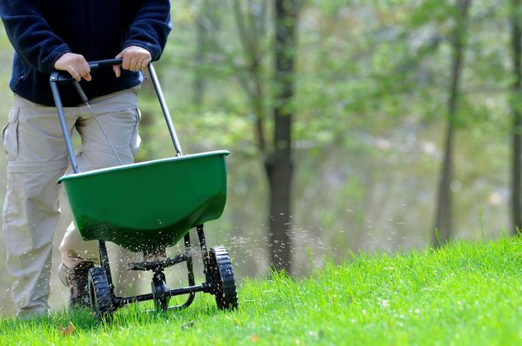 This is the most important time of year to fertilize for cool-season grasses. This last application of slow-release organic fertilizer will provide the grass with the strength it needs to make it through winter. Lay down about 1-4 pounds per 1,000 square feet of grass that gets full sun (shaded areas of your lawn don't need quite as much). Find out more!