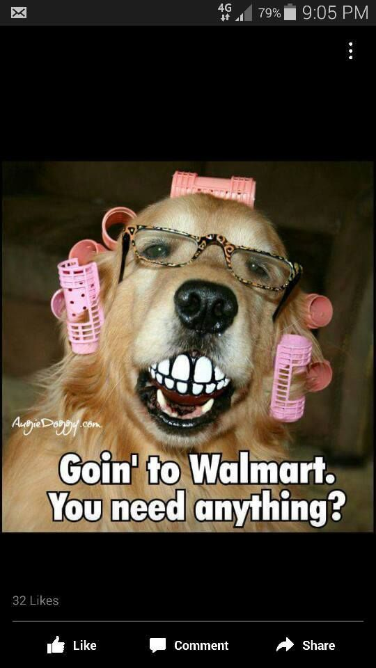 Going to walmart - funny dog meme - http://jokideo.com/going-to-walmafunny-dog-meme/