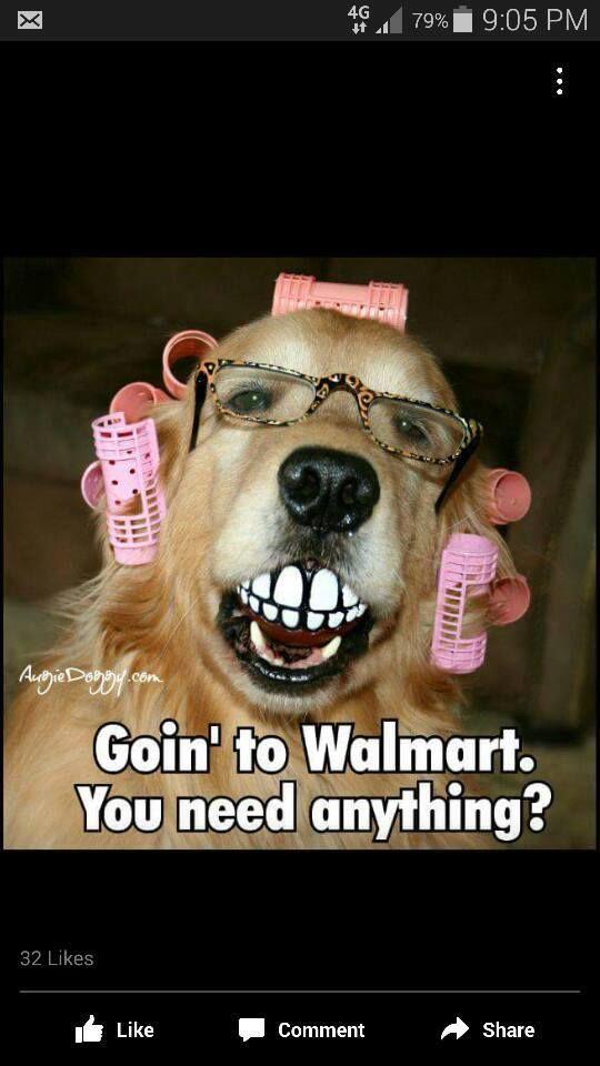 Funny Dog Joke Meme : Going to walmart funny dog meme http jokideo