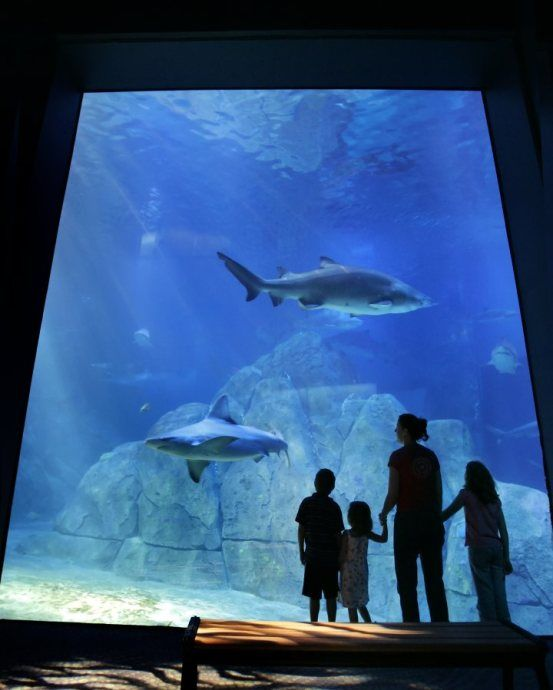 Adventure Aquarium, Philadelphia, Family-friendly, Museums & Attractions - See this and the other great attractions in family friendly Philadelphia.