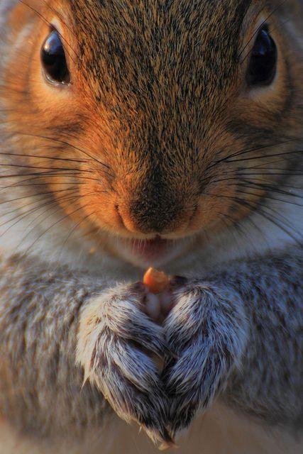 Bon anniversaire mon écureuil, ma galounette cendré, mon amie, ma bro ^^ Plein de bisous.