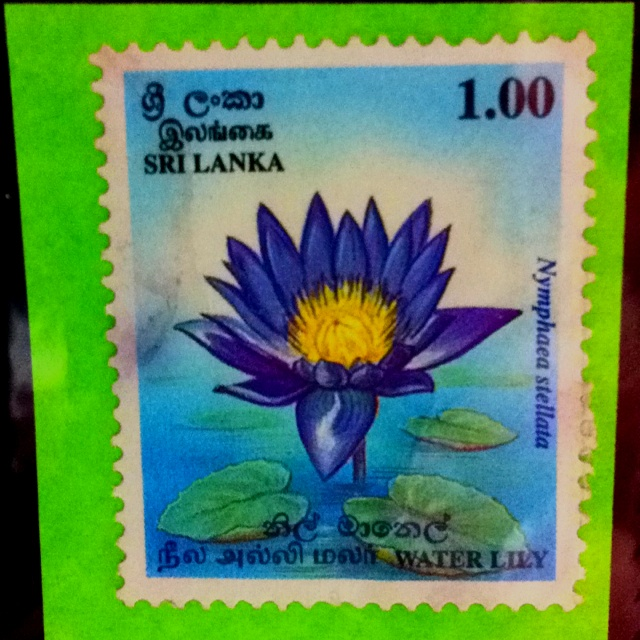 Lotus, from Sri Lanka