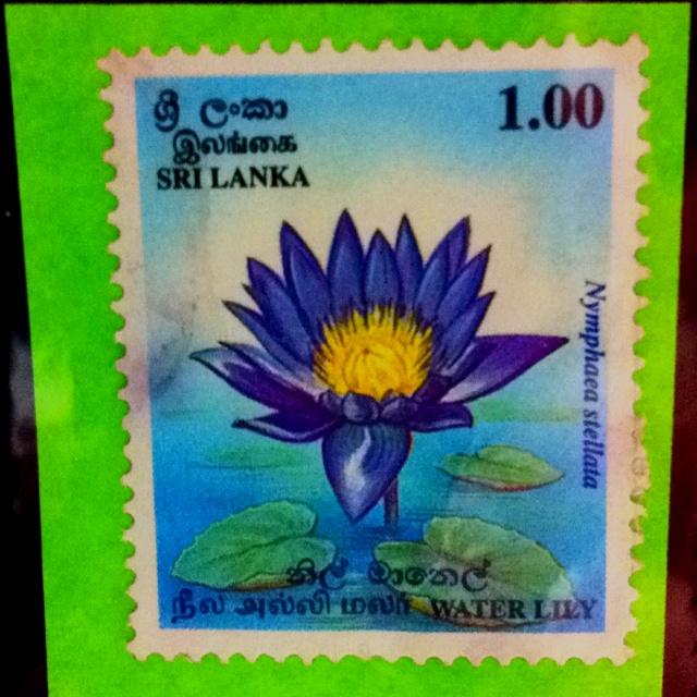 Lotus, from Sri Lanka