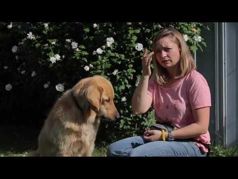 Hund hört nicht/Blickkontakt/ Hund aufmerksam machen/ Welpenerziehung - YouTube