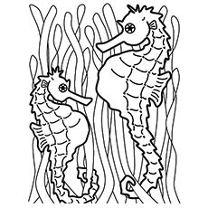 baby seahorses coloring pages - photo#29