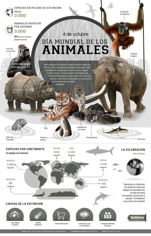 Día Mundial de los animales #infografia