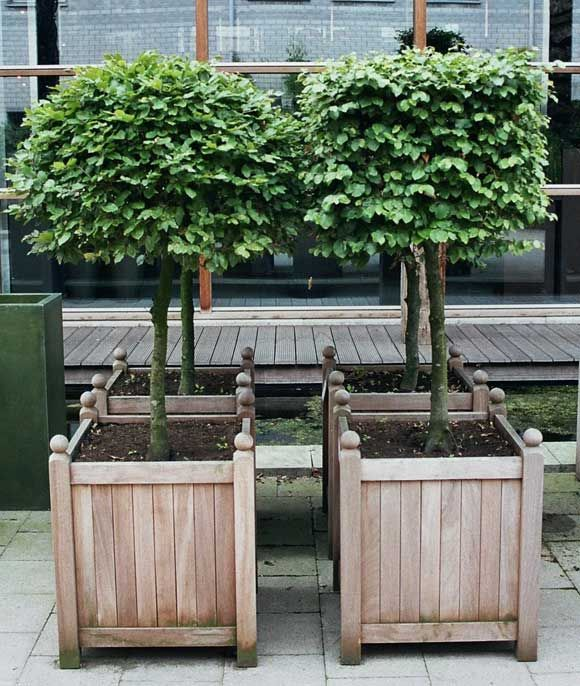 topiaries in wood planters : World's Most Beautiful Garden Planters, by Way of Belgium : Remodelista