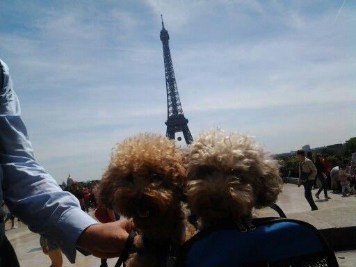 Tour Eiffel, Paris - Giugno 2015