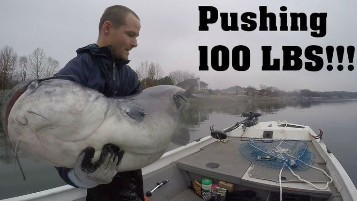PUSHING 100 LBS!!! Catching My NEW PERSONAL BEST Blue Catfish (Giveaway Included)