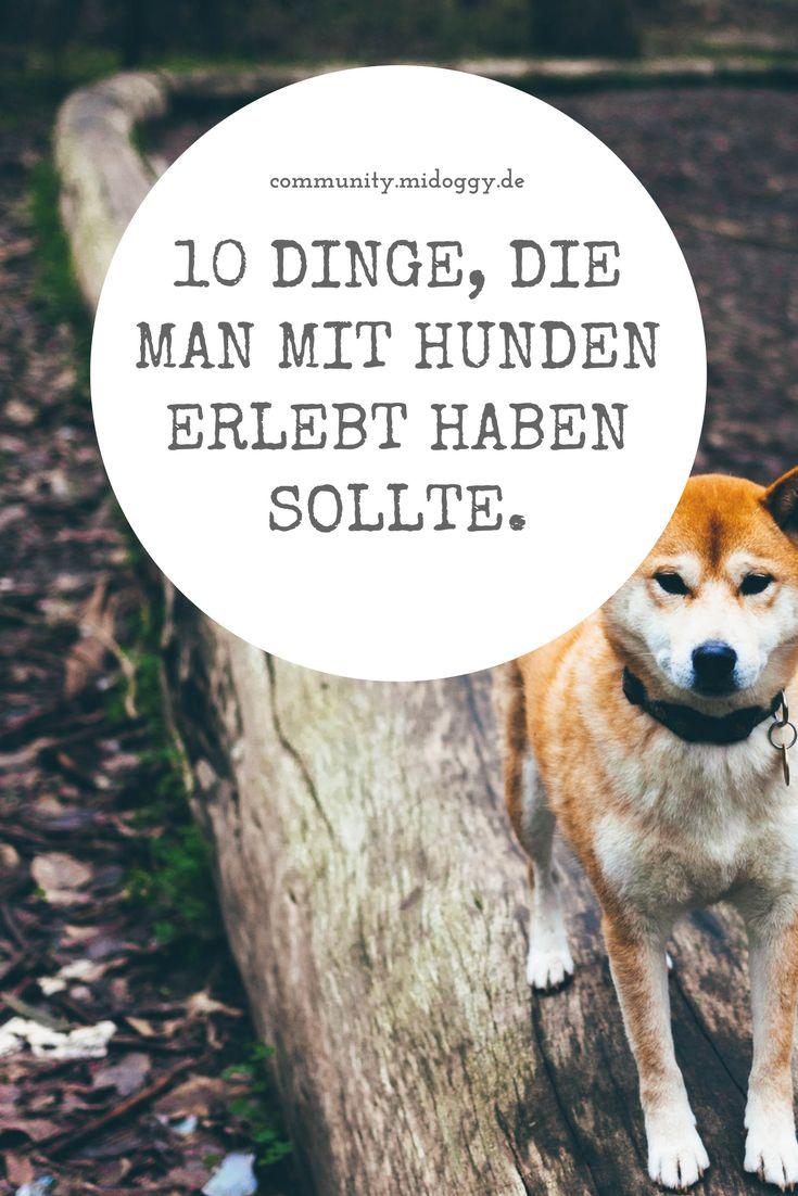 || #Hund || Ideen || #Hunde || Tipps || Tricks || Ideen || Liebe || Welpen || Bilder || #Lifegoals