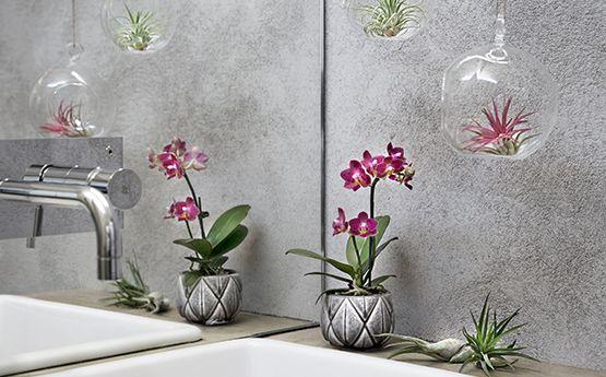 Den nye trenden: heng opp flotte luftplanter