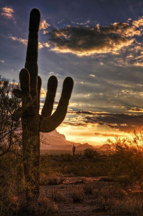 1759 Best I Love You Arizona Desert Images On Pinterest