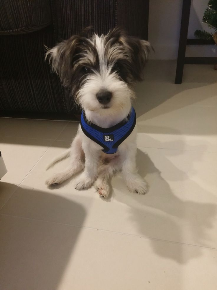 Ewok's first harness