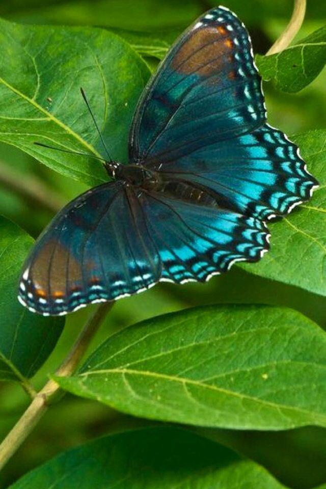 iPhone Wallpaper - Butterflies tjn | Beautiful butterflies ...