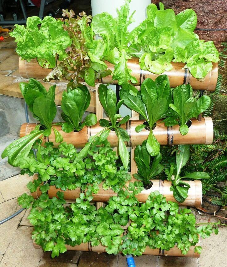 you want to have your own herb garden, but has too little space.  Here is the perfect solution.