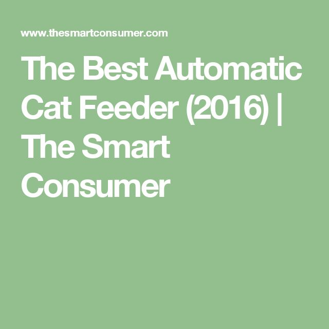 The Best Automatic Cat Feeder (2016) | The Smart Consumer
