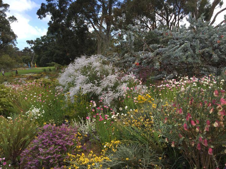 Wild flowers Kings Park, Western Australia