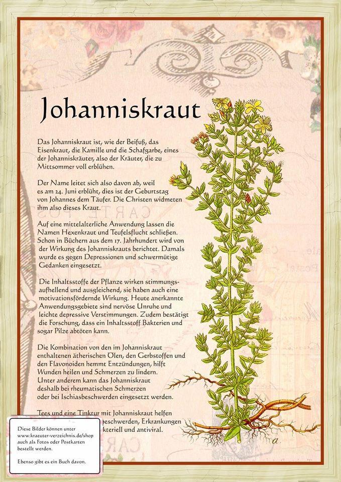 Johanniskraut http://www.kraeuter-verzeichnis.de/ Mehr