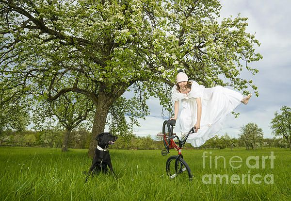 BMX Flatland artist Monika Hinz from Germany doing a spectacular jump in a wedding dress on a green spring meadow in front of a blooming apple tree. A black dog is watching very interested. Click here to purchase a poster, print or canvas print: http://matthias-hauser.artistwebsites.com/featured/bmx-flatland-bride-jumps-in-spring-meadow-matthias-hauser.html  Watermark will not appear on final product. 30 days money back guarantee. (c) Matthias Hauser hauserfoto.com #bmx #bmxflatland