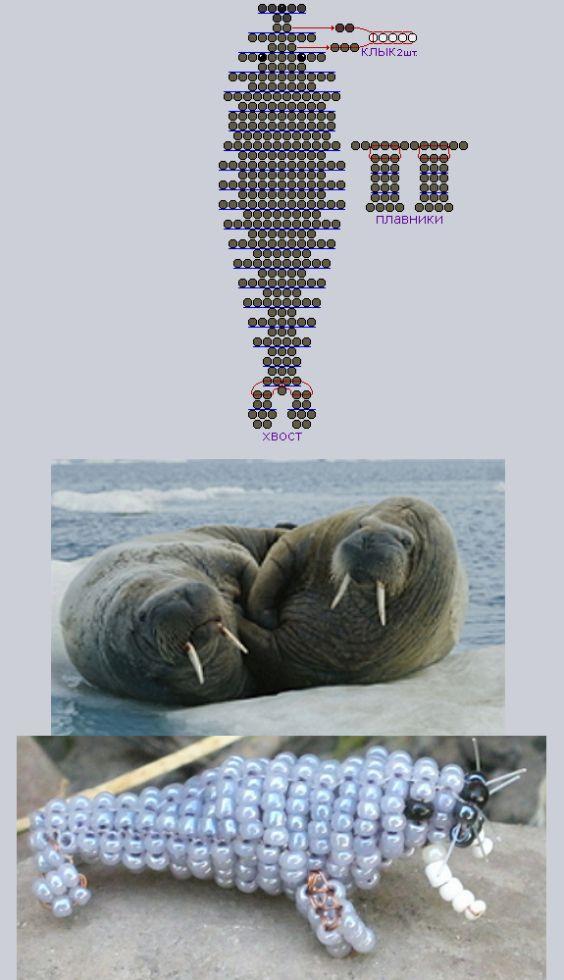 Фотография тюленя