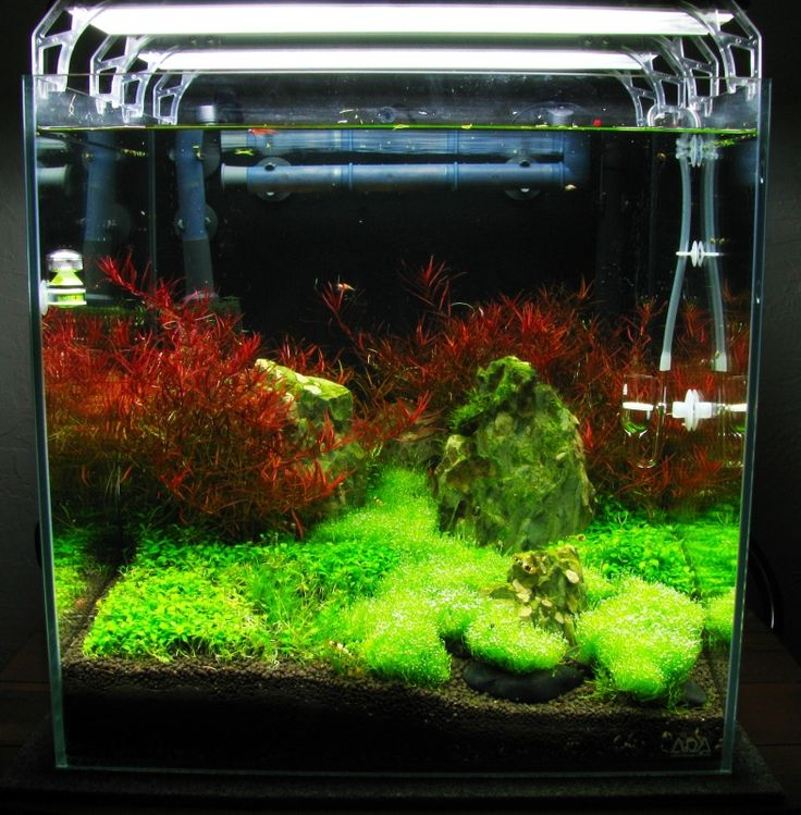 Ada mini cube tanks aquarium plants for more information for Ada fish tank