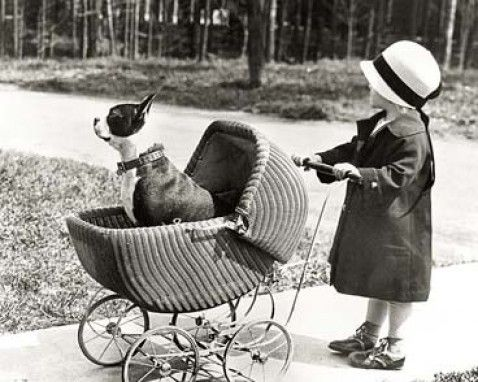 """Giving new meaning to """"take the dog for a walk"""" Note the bulldog/pit bull, regarded as the """"nanny"""" dog of the era."""