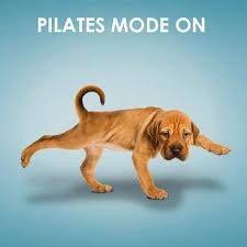 Que fofo! Kkk Adoro pilates apesar de ser novinha ainda kkk acho que o pilates ajuda na postura e a fortalecer o corpo também.