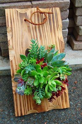 6月の初級教室「多肉植物を使って」の画像:kusakiの「この植物をお買い!」