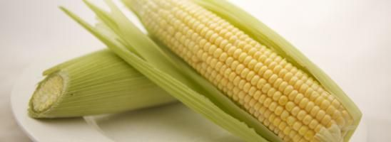 Organic Vegetables Brisbane - Sweet corn is sweet and tender at the moment.