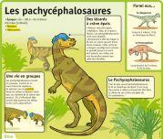 Les pachycéphalosaures - Le Petit Quotidien, le seul site d'information quotidienne pour les 6 - 10 ans !