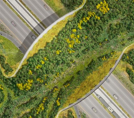 Love this! Wildlife bridges are special crossings that help animals get across highways safely. Lush foliage, soil and streams lure bears, deer, moose, and other wildlife over or under busy roadways. The crossings aren't just for protection. They also help connect habitats that are broken up by roads.