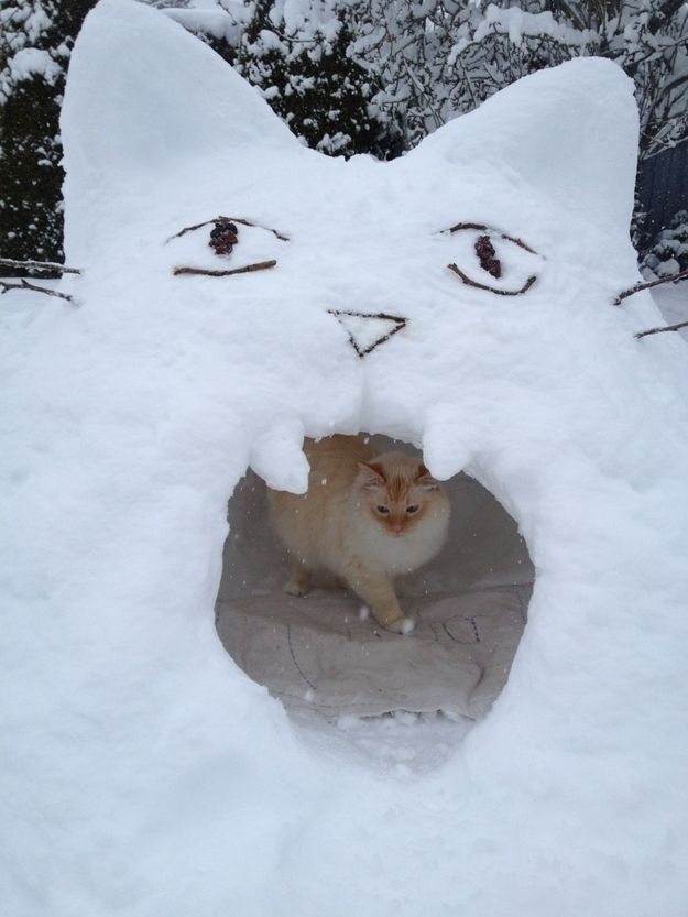 And look at his cat fort! | Look At This Amazing Cat's Snow Fort And Get Real Jealous