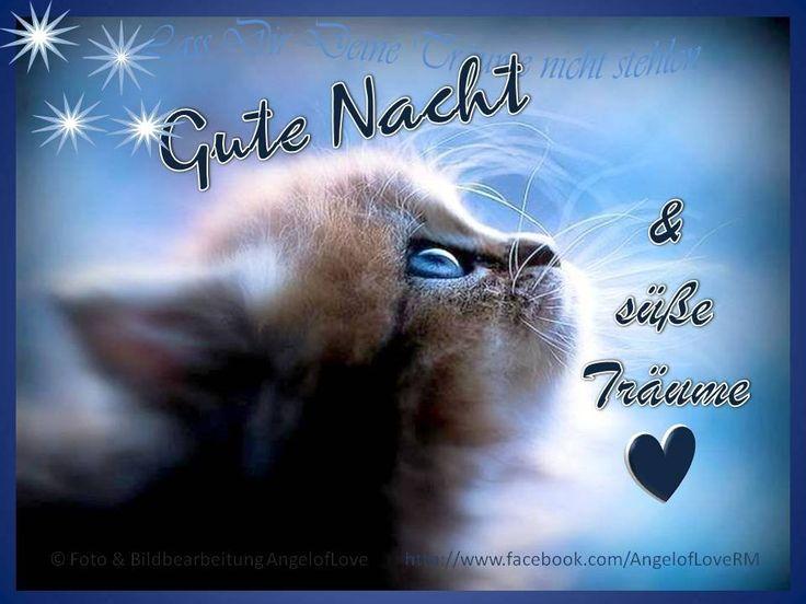Gute nacht, Gute nacht katze, Gute nacht grüße