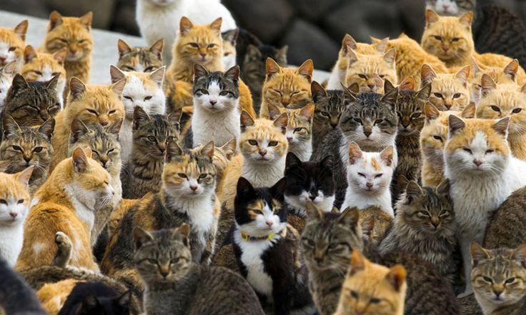 Aoshima gatos isla