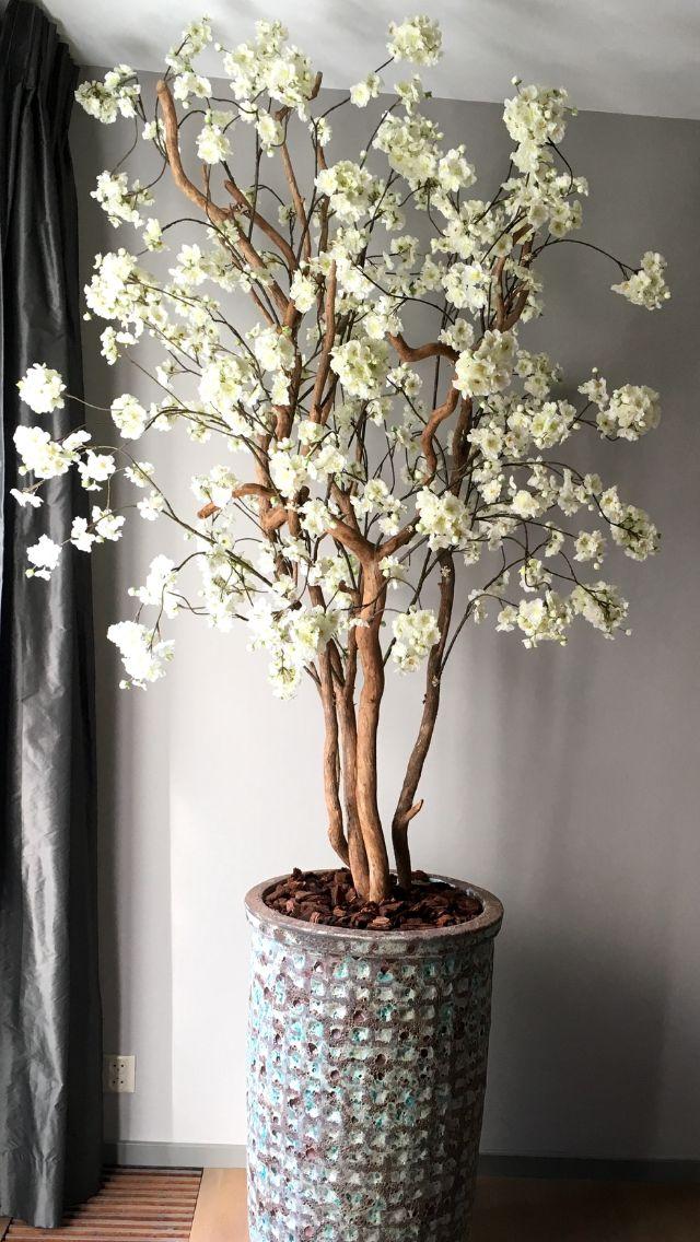 Prachtige bloesemboom geplaatst in Geldrop. Sn't she lovely?