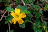 http://altmedicine.about.com/od/herbsupplementguide/a/damiana.htm