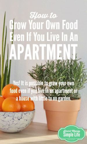 How to Grow Your Own Food, Even If You Live in an Apartment - Smart Money, Simple Life #sustainable