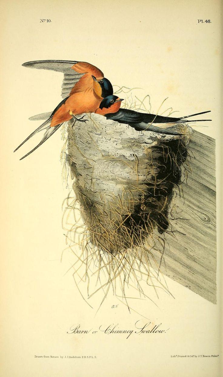 1443 Best Oiseaux Dessins Images On Pinterest